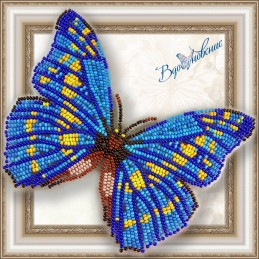 "BGP-010. BUTTERFLY ""Morpho cypris"""