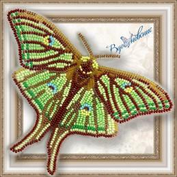 BGP-016. Метелик «Грельсия...