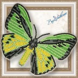 BGP-020. Метелик «Птіцекрил...