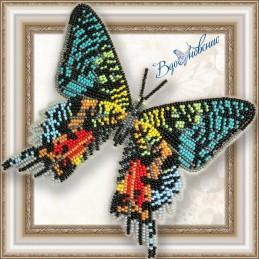 BGP-043. Метелик «Уранія...