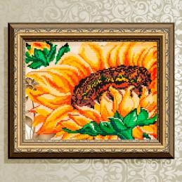 VKA4101. Sunflower