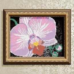 VKA4105B. Orchid on black