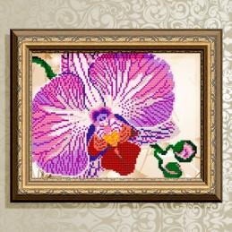 VKA4105. Орхидея