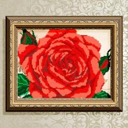 VKA4109. Роза