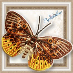 "BGP-054. BUTTERFLY ""Eurybia..."