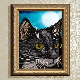 VKA4333. Black cat