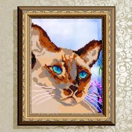 VKA4334. Сіамський кіт