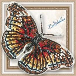 BGP-073. Метелик «Euryphura...