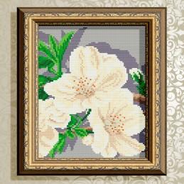 АТ5559. «Яблуневий цвіт»...