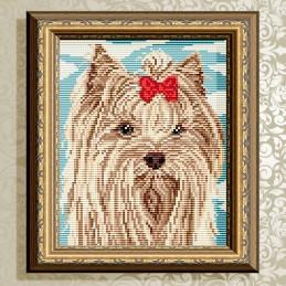 АТ5587. Yorkshire Terrier...