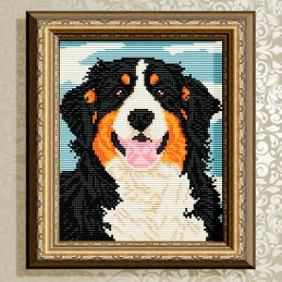 АТ5591. Bernese mountain dog