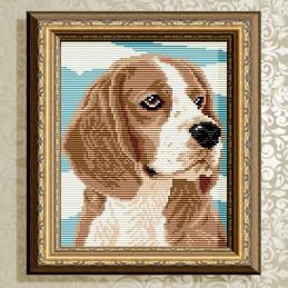 АТ5594. Beagle