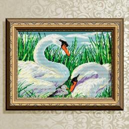 AT3011. Swan family
