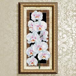 VKA3094. Орхидея
