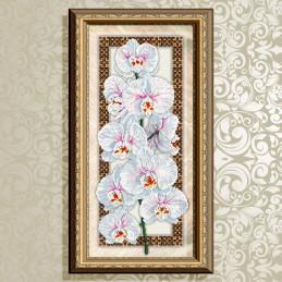 VKA3095. Орхидея